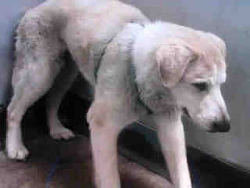 Pin On Urgent Dogs On Death Row