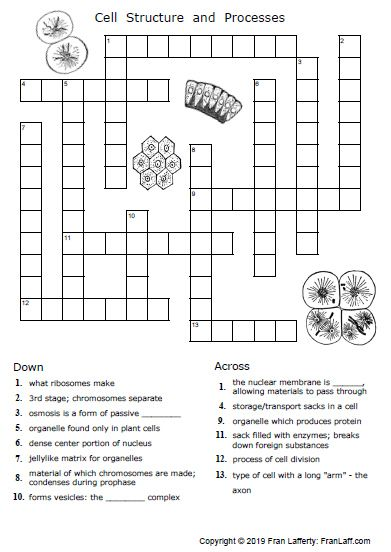 Cell Division Worksheet 12 1 Answer Key Printable Worksheets Are A Precious School Room Tool They No Longer In 2021 Biology Worksheet Science Worksheets Cell Cycle