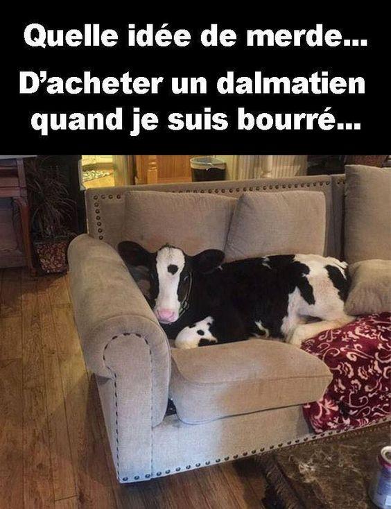 Quelle idée de #merde d'#acheter un #dalmatien quand je suis bourré ! #blague #rire #mdr #humour #lol #blagues #humours