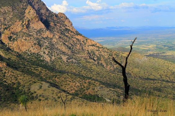 Some people (including a few commenters on our Facebook page) think Arizona has only one national park. While the Grand Canyon may be the most famous national park here, Arizona is home to 22 natio...