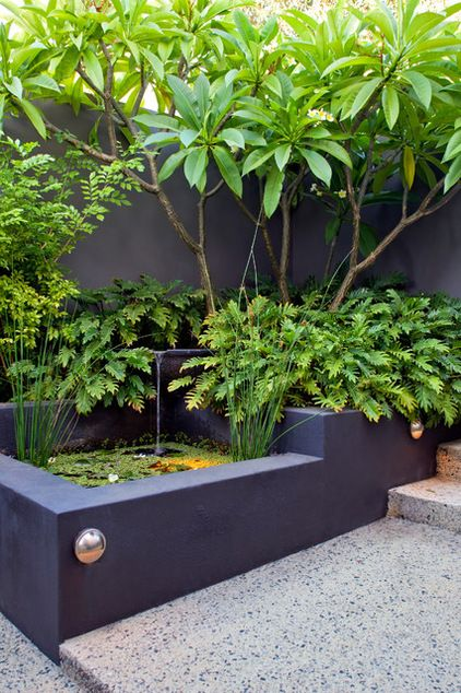 Un coin de jardin urbain en Australie. Une fontaine s'écoule dans un bassin entouré de plantations luxuriantes. Un mur de béton gris ardoise fait ressortir tout ce vert feuillu. Tropical Landscape by Cultivart Landscape Design. (Houzz):