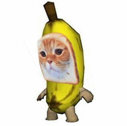 Pin By Kd On Cat Funny Cute Memes Cute Memes Cat Profile
