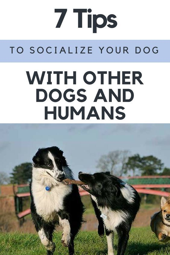 7 Tips To Socialize Your Dog With Other Dogs And Humans Dogbrain