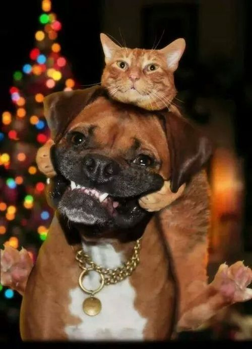 Cute Cats' Love For Big Dogs - Definition Of Love - Slydor - Your Daily Dose Of Fun.