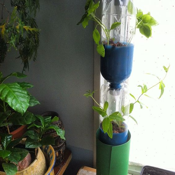 #hydroponics window farm - Toronto.  Verbena, Basil and Dill.  Attempt #1  ...  made from Brio bottles, frozen w water to drill holes easier, spray painted. This is a no-pump system.