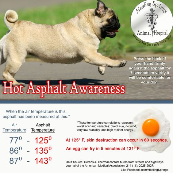Be careful when walking your dog when it is very hot outside.