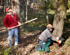 Cut Down A Tree Safely Trees Helpful Tips And Cas