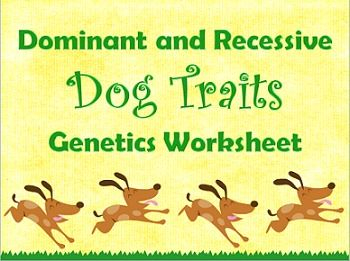 dominant and recessive traits in dogs genetics worksheet student the o 39 jays and photos. Black Bedroom Furniture Sets. Home Design Ideas