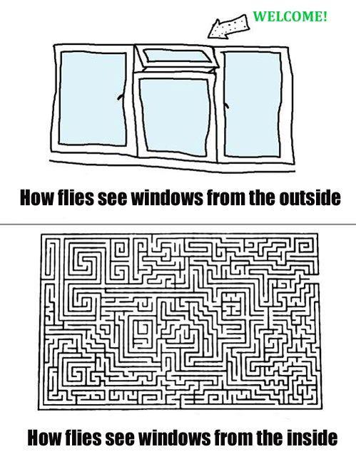 How flies see windows.