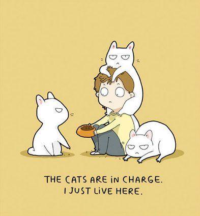 Si vous aimez les chats, vous vous reconnaîtrez dans ces dessins
