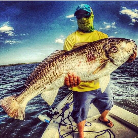 Redfish reddrum bullied saltwater fishing www relogear com for Offshore fishing apparel