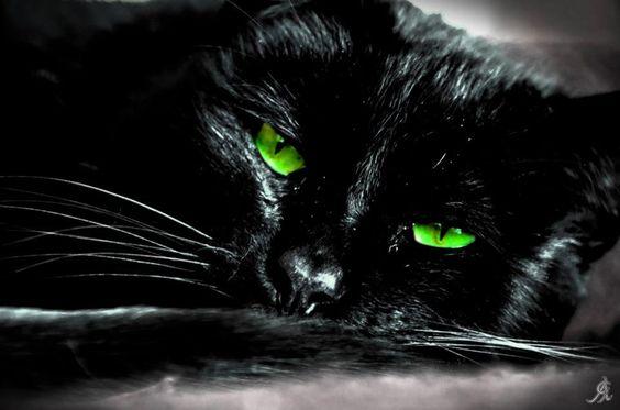 . Que yo sepa, ningún gato tiene este color de ojos.
