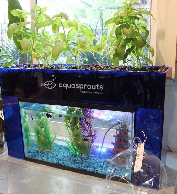 Aquaponics aquarium and gardens on pinterest for Aquaponics aquarium