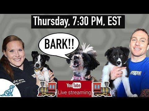 How To Stop Your Dog From Barking Professional Dog Training Tips