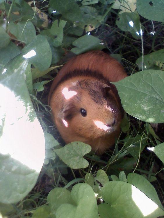 Run around in the garden and explore