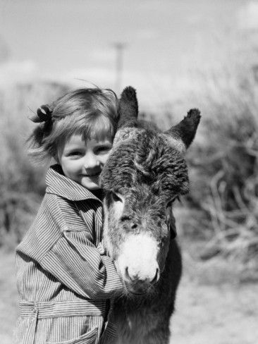 Big warm donkey hug!