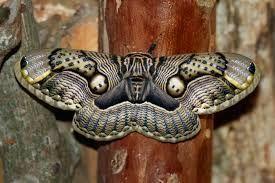 moth - Google Search