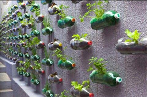 Tuto mur végétale!