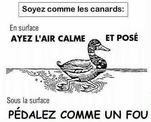 Soyez comme les canards  http://erdelcroix.tumblr.com/post/32275104306