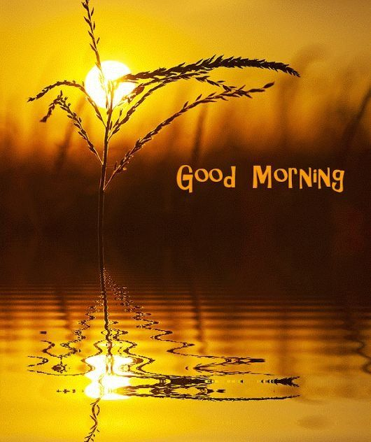 Download Beautiful Good Morning In Nature Gif Png Gif Base In 2020 Good Morning Sunrise Good Morning Images Morning Pictures