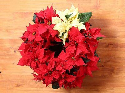 【WFS】花のギフト・プレゼントの通販・宅配