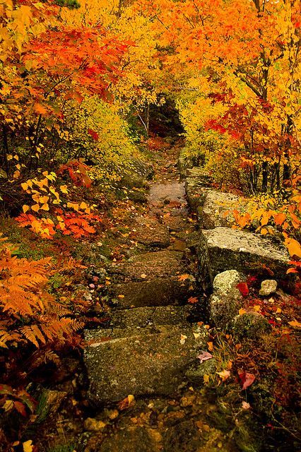 Dorr Mountain Trail, Acadia National Park,   Maine.  Who knows, Hiking might even be on the agenda, if it's this   beautiful.