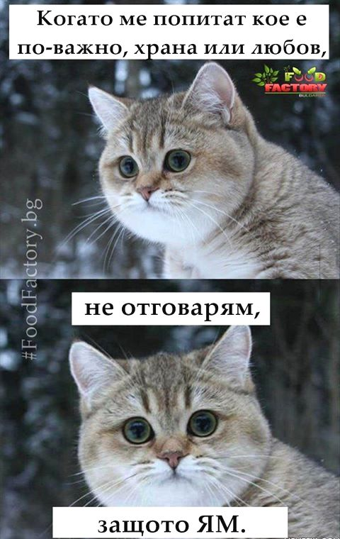 Ha Ha Bulgaria Food Fur Informationen Zugriff Auf Unsere Website Https Storelatina Com Bulgari Funny Animal Memes Funny Animals Funny Cat Videos