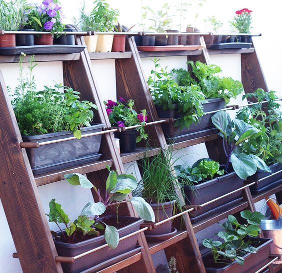 Huerta en cuatro niveles son estanterias inclinadas de for 5 cultivos faciles para empezar un huerto en casa