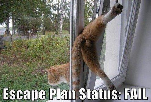 Escapist Cat