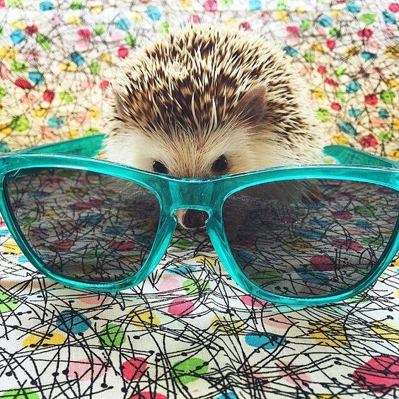 erizo vampiro instagram mis gafas de pasta13