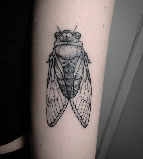 cicada tattoo insect tattoo and tattoos and body art on