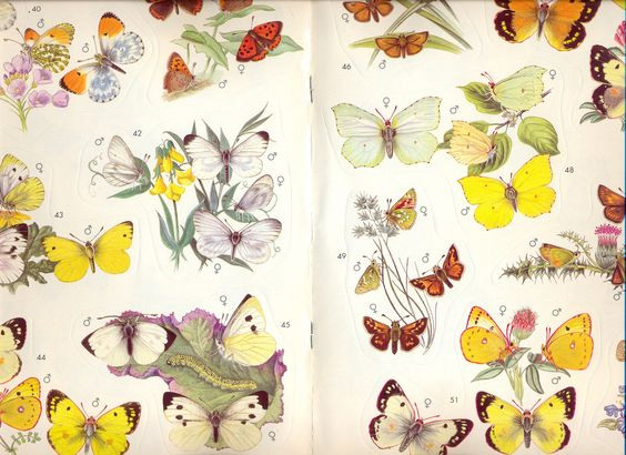 Butterflys from Livia Firth's childhood sticker book