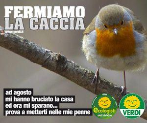STOP CACCIA!!!