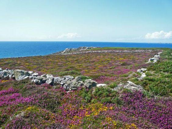 Au Cap de la chèvre (Finistère), le paysage de lande à bruyères s'achève brutalement en bordure des falaises plongeant dans l'Océan.   Sur fond de mer d'Iroise, la presqu'île de Crozon étire son littoral dentelé au bout du Finistère. Un sentier côtier, dit chemin des douaniers, est propice à la découverte des paysages et des côtes protégés par le Conservatoire du littoral et par le Parc naturel régional d'Armorique, qui ont su préserver ce site comptant parmi les plus sauvages de Bretagne.