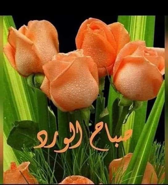 Pin By Gihan Aly On صباح الخير Good Morning Messages Good Morning Greetings Morning Greeting