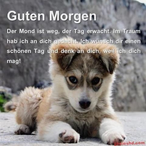 Hundespruche In 2020 Lustige Guten Morgen Bilder Guten Morgen Bilder Tiere Guten Morgen Bilder