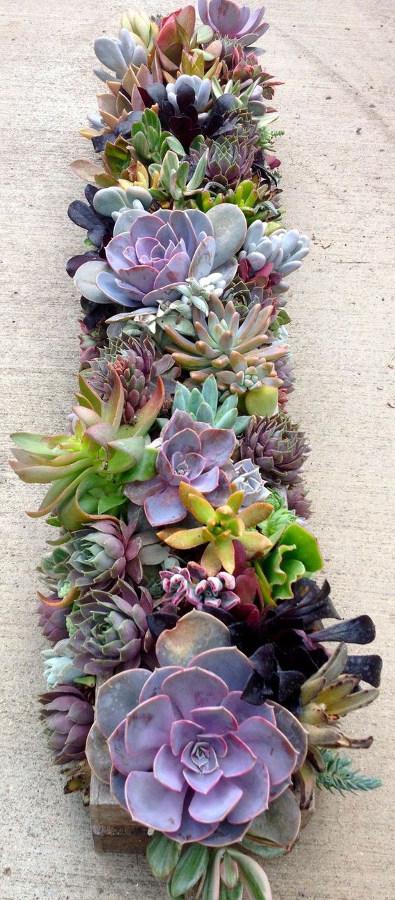 succulents In a box for on the floor of the fireplace: