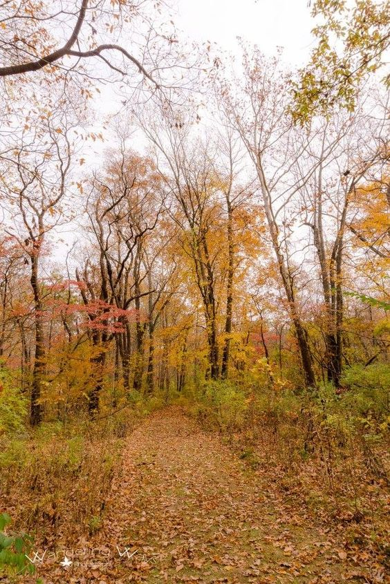 Walking path in autumn at Shakamak State Park in Indiana captured by Wandering Ways Photography 2016