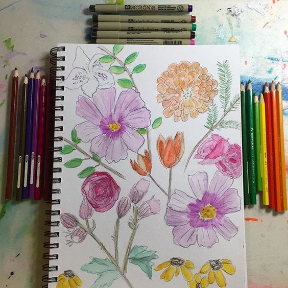 "59/366 study of flowers in watercolour and ink.  Tapping into my ""use what you have"" plan for 2016 i changed up supplies  @sakuraofamerica coloured microns and @fabercastellglobal watercolour pencils"