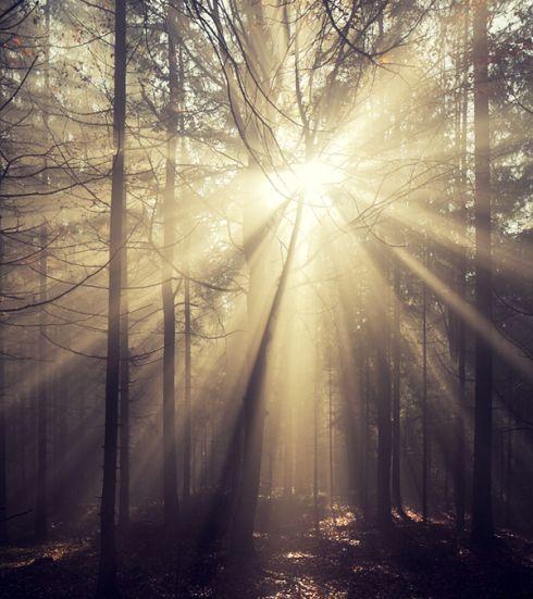 sonnenstrahlen explosion wald nebel baum