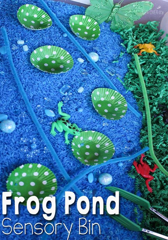 Life cycles nature and pond habitat on pinterest for Small frog pond ideas