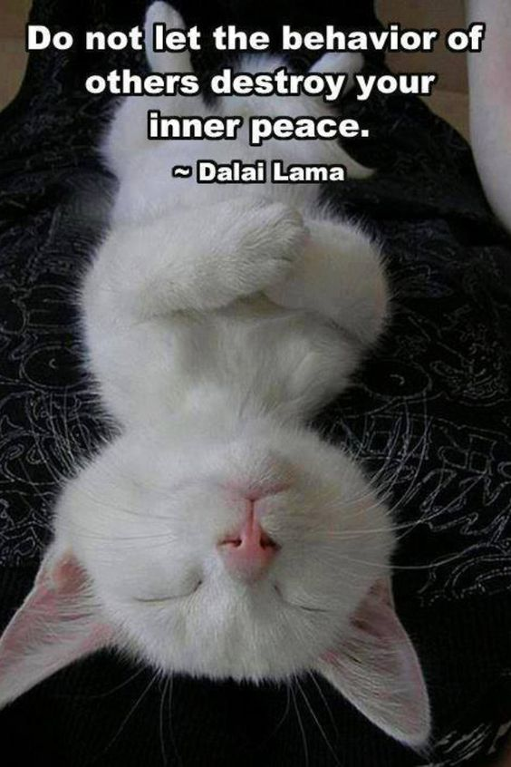 """""""Do not let the behavior of others destroy your inner peace."""" - Dalai Lama #quote #cat How cute is this picture?"""