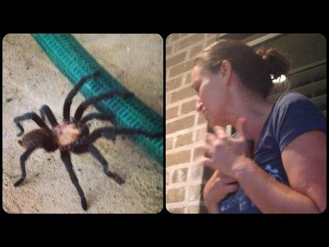 Eensy Weensy Spider Nearly Scares Mom to Death