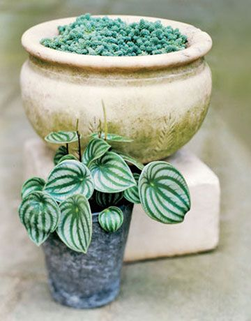 Container Gardens - Container Gardening Ideas - Country Living