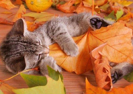 jugando con las hojas otoñales