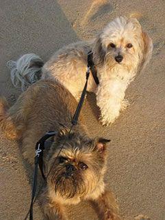 Pet friendly travel (dog-friendly beaches)