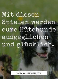 Spiele Und Action Fur Ausgeglichene Hutehunde Werbung Midoggy Community Tipps Zur Hundeerziehung Hunde Hunde Welpen Erziehung