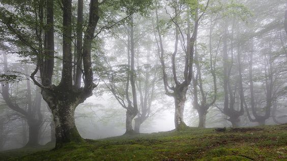 https://flic.kr/p/vSjvow | Sintxita | Tomada en el conocido hayedo del Parque Natural del Gorbea