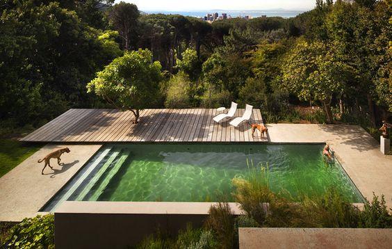 if it were blue wap it up green looks like algae to me piscinas pinterest backyards. Black Bedroom Furniture Sets. Home Design Ideas