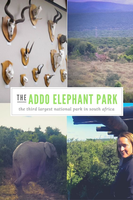 How about a drive into the Addo Elephant National Park, one of the largest in South Africa?
